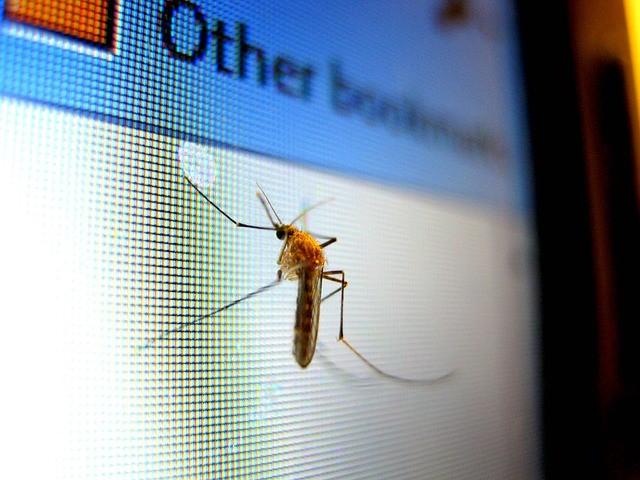 Different pests in Brokaw Wisconsin