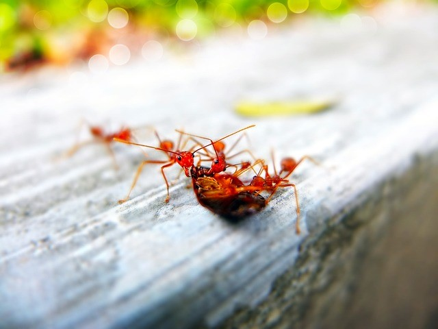 Different pests near Tripoli Wisconsin