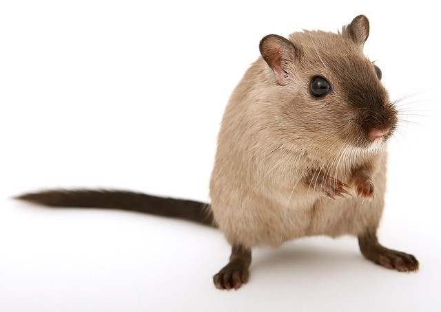 Pest control services in Dorchester Wisconsin
