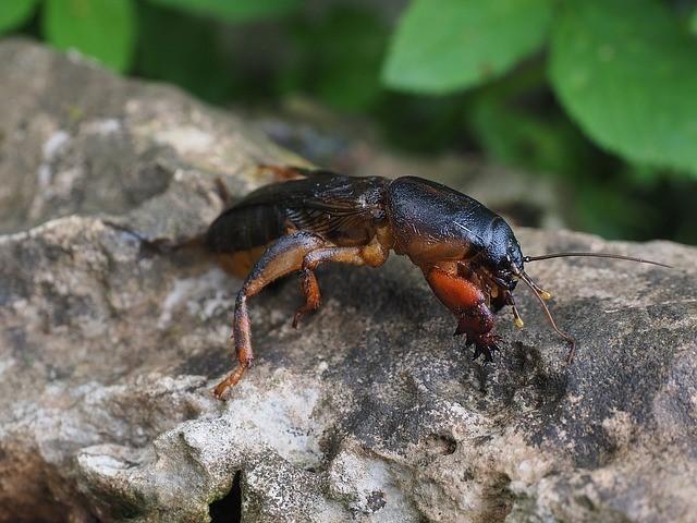 Types of pests in Blenker Wisconsin