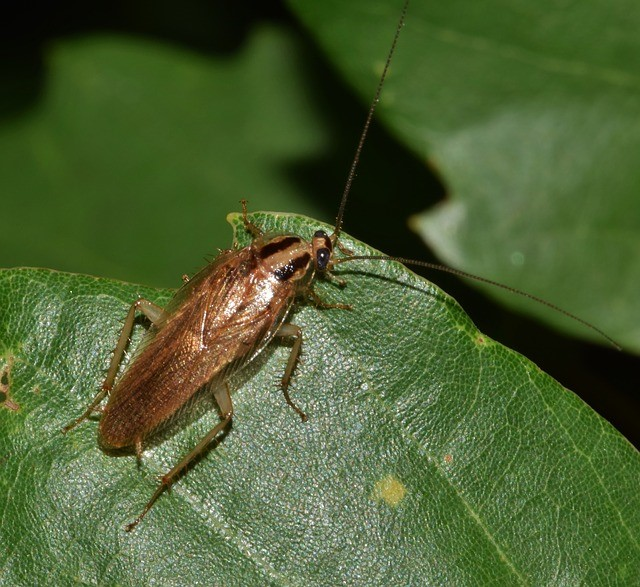 Types of pests in Neillsville Wisconsin